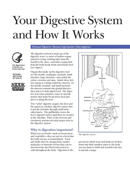 Your Digestive System and How It Works | IBD Clinic